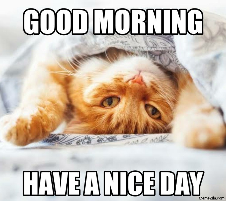 Good morning have a nice day cat meme
