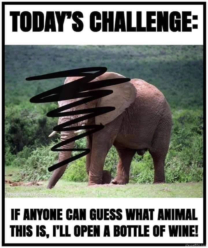 Guess the animal elephant meme