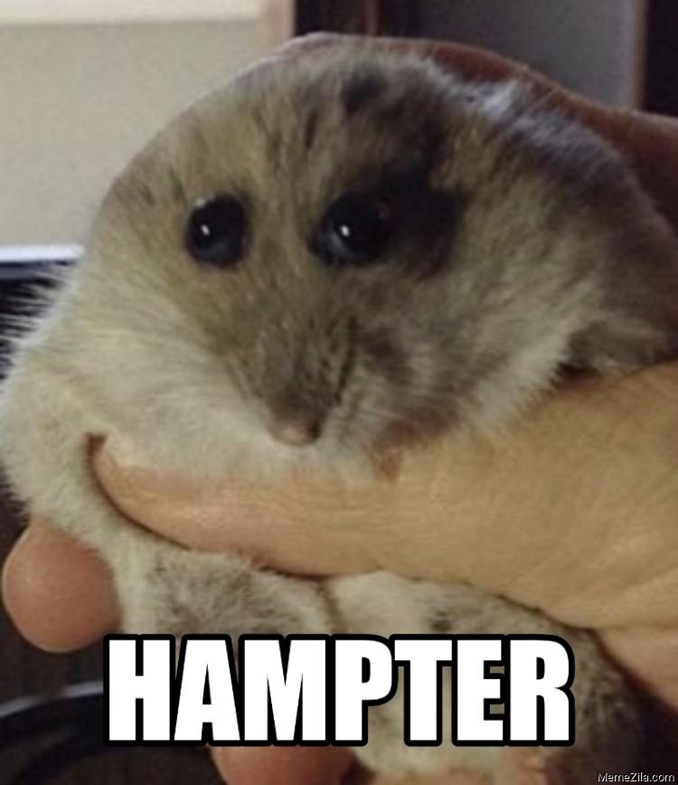 Hampter meme