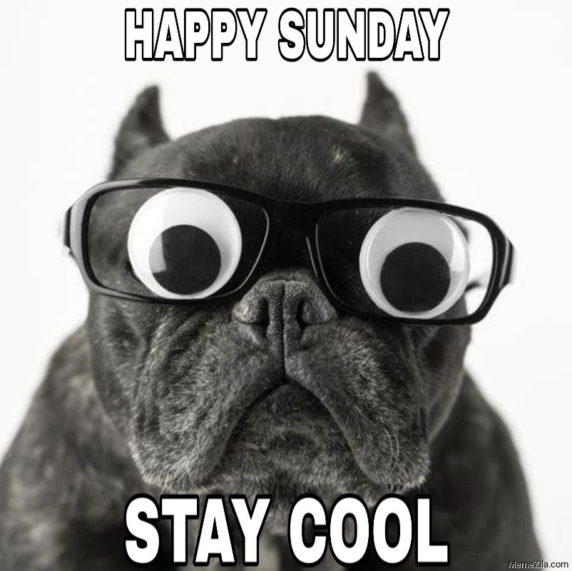 Happy Sunday Stay cool Dog with glasses meme