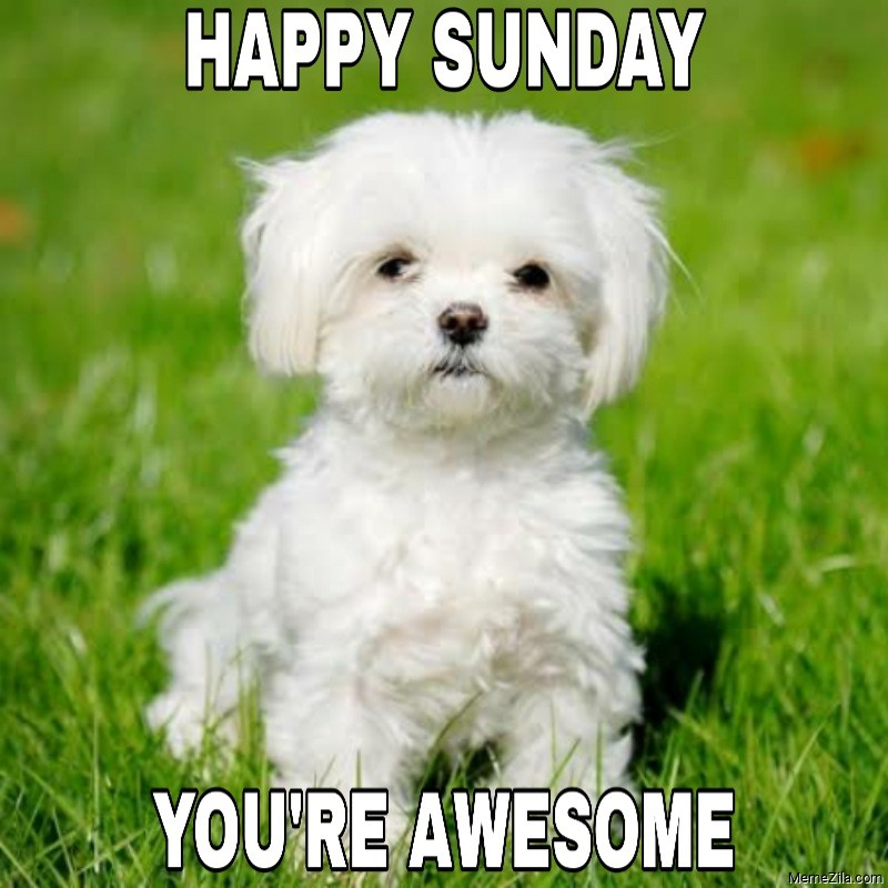 Happy Sunday You are awesome meme