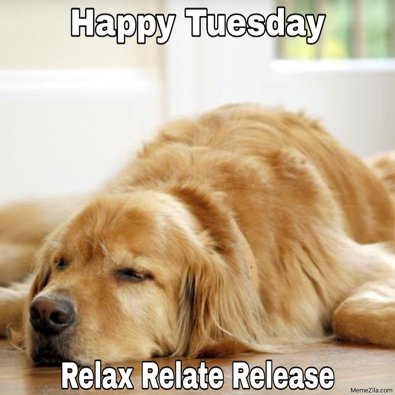 Happy Tuesday Relax relate release meme