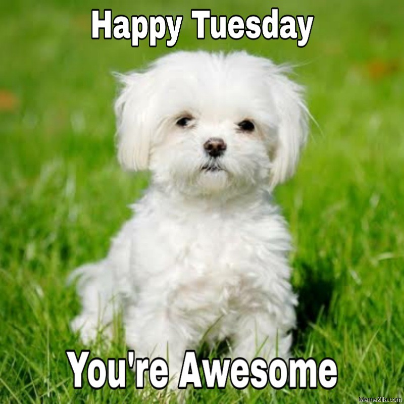 Happy Tuesday You are awesome meme