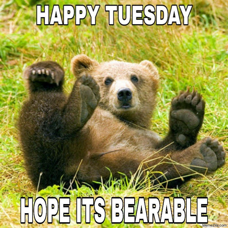 Happy Tuesday hope its bearable meme