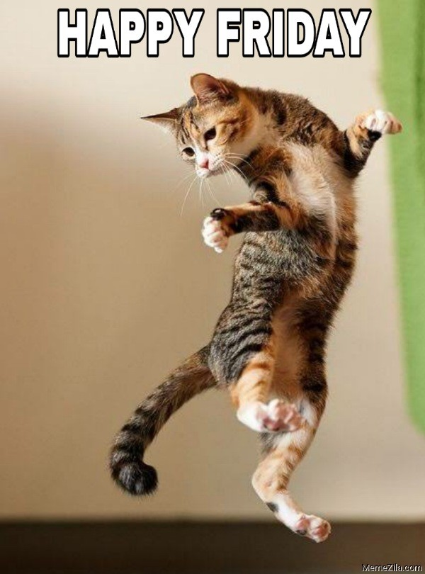 Happy friday Dancing cat meme