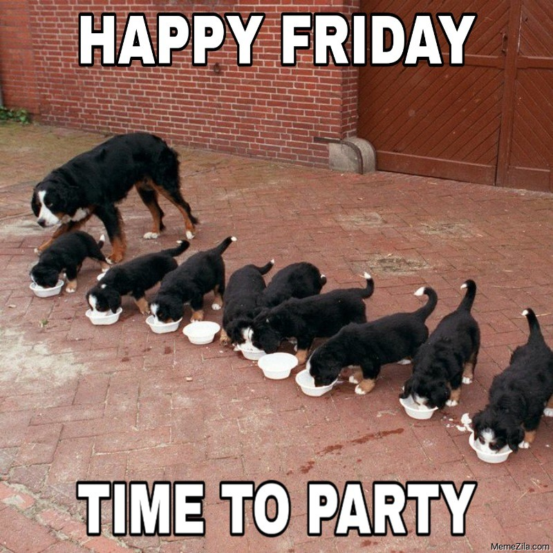 Happy friday Time to party Dog meme