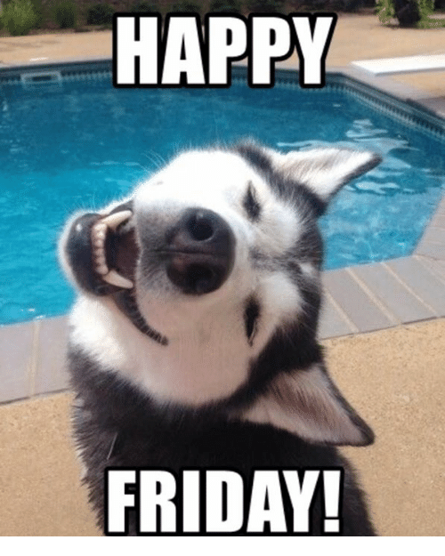 Happy friday dog meme