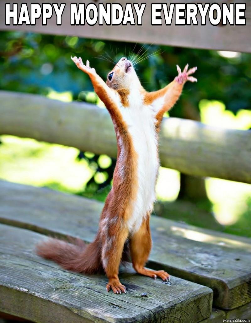 Happy monday everyone squirrel meme