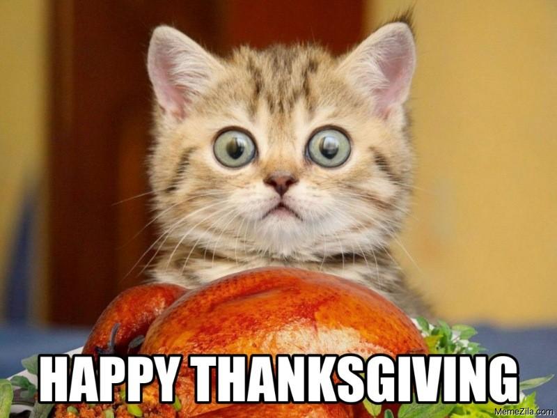 Happy thanksgiving cat meme