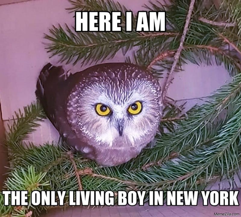 Here I am the only living boy in New York Owl meme