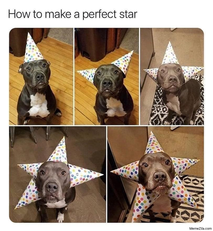 How to make a perfect star dog meme