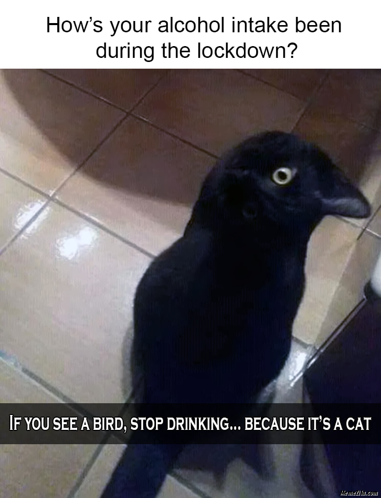Hows your alcohol intake been during lockdown If you see a bird stop drinking Its a cat meme