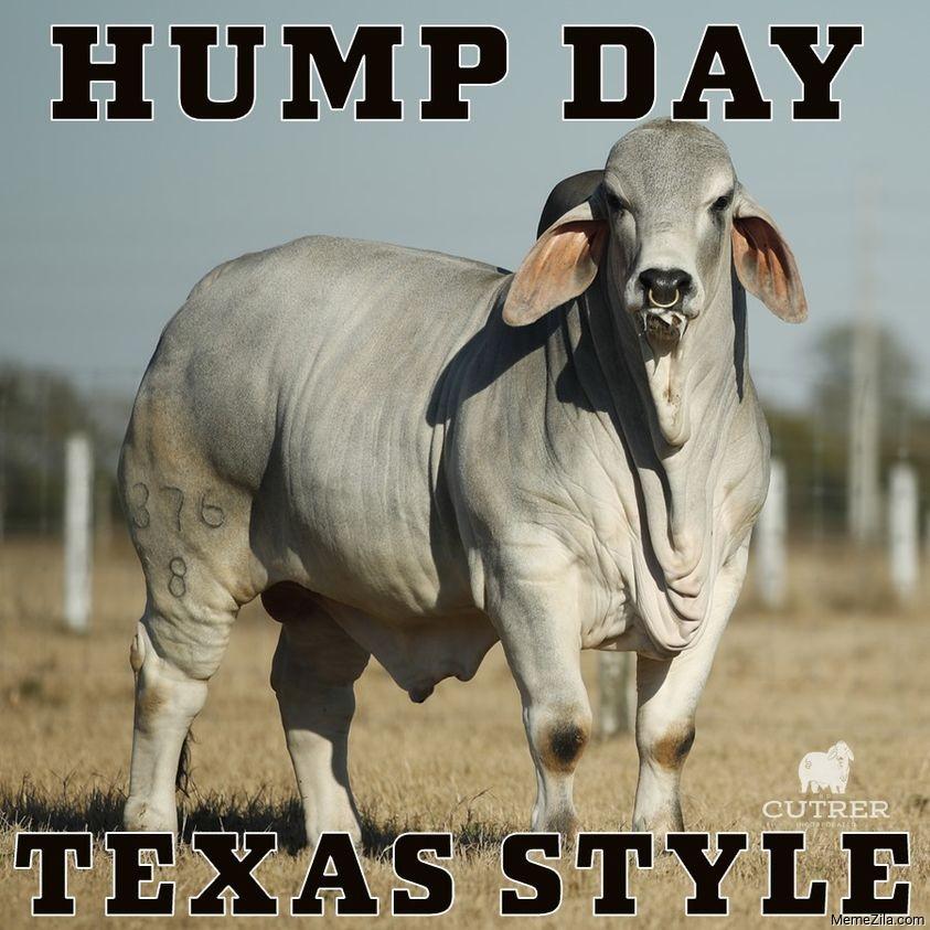 Hump day Texas style meme