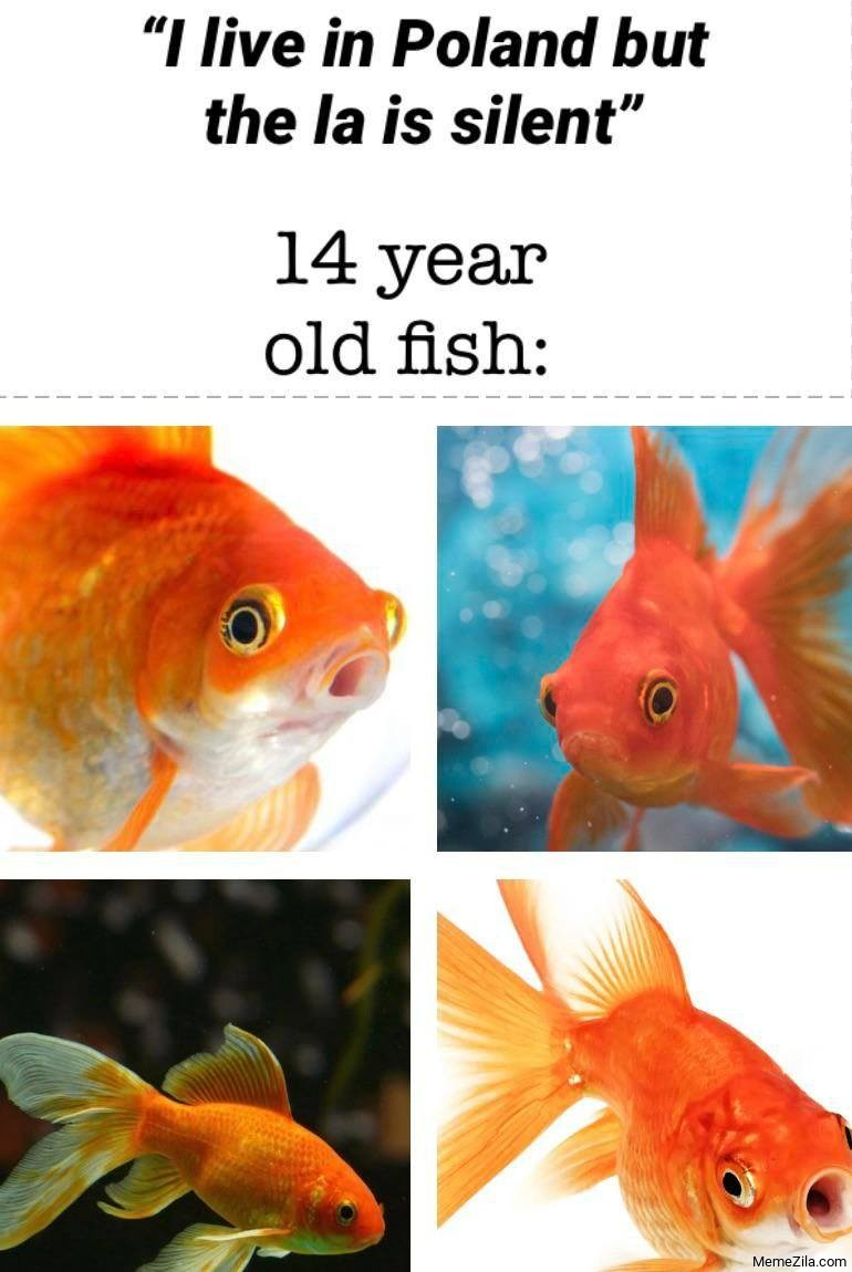 I live in Poland but the La is silent Meanwhile 14 yr old fish meme
