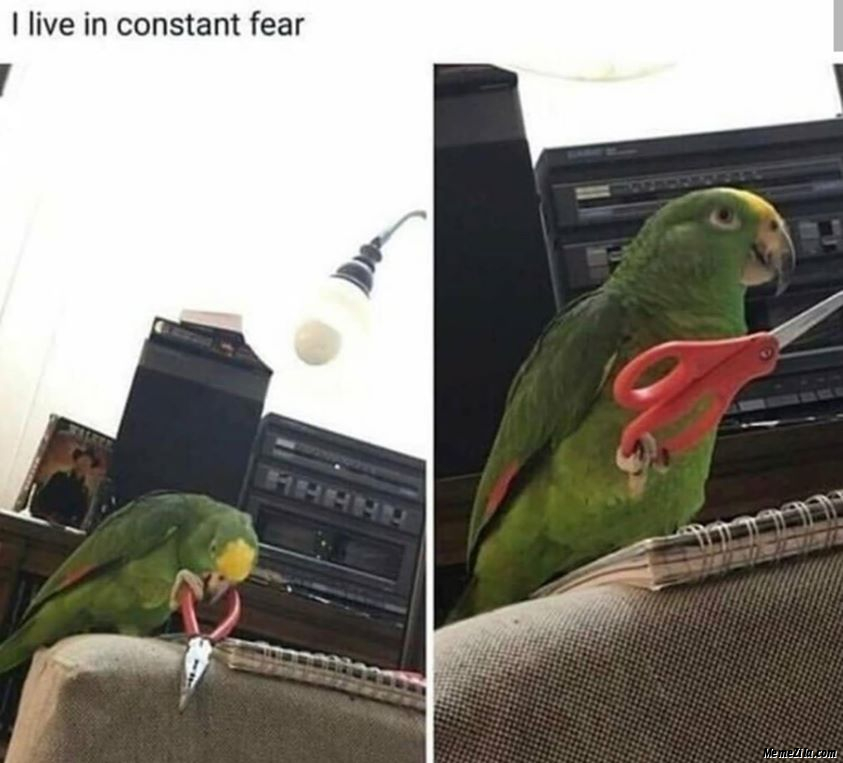 I live in constant fear meme