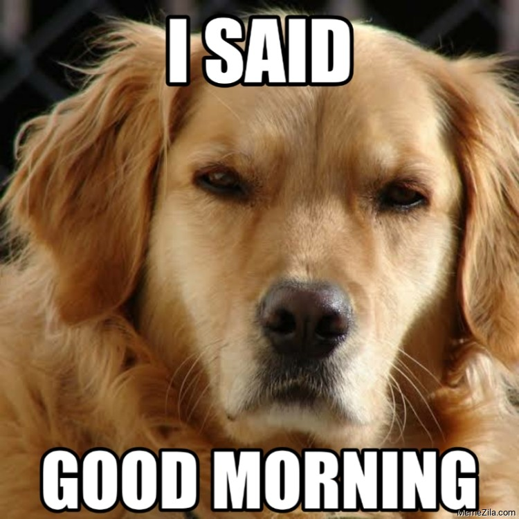 I said Good morning dog meme