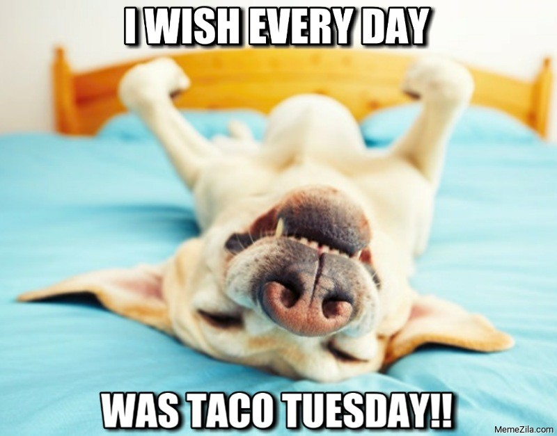 I wish every day was a taco tuesday dog meme