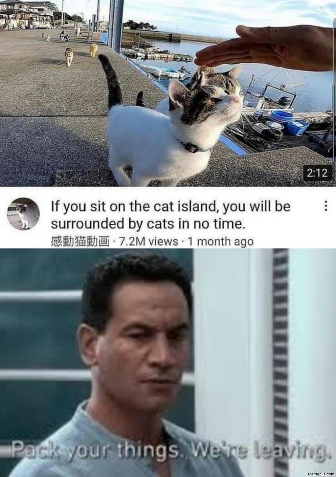 If seat on the cat Island you will be surrounded by cats in no time meme
