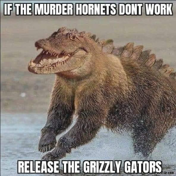 If the murder hornets dont work Release the grizzly gators meme