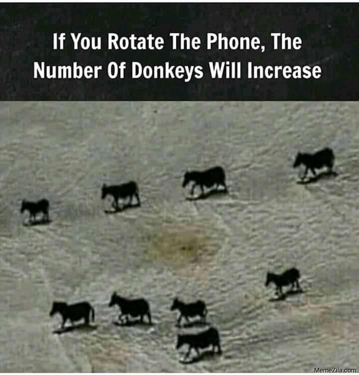 If you rotate the phone The number of donkeys will increase meme