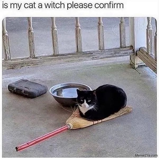 Is my cat a witch please confirm meme