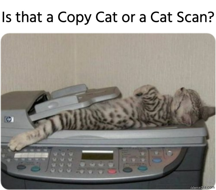 Is that a Copy Cat or a Cat Scan meme