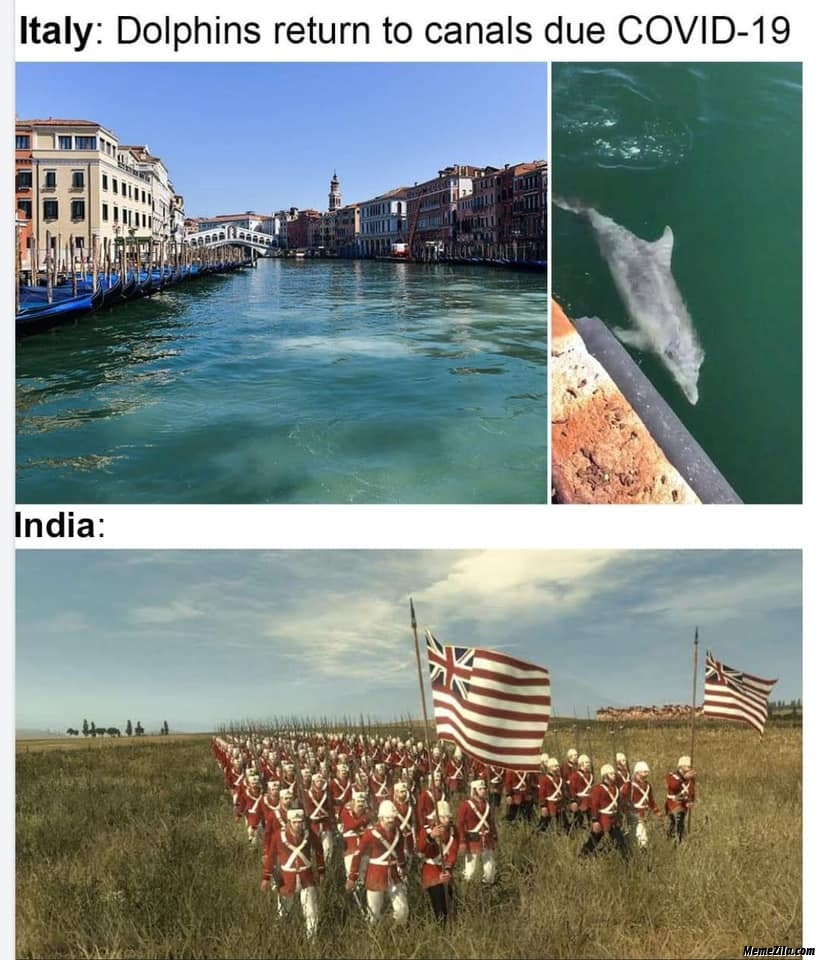 Italy Dolphins returned to canals due covid-19 Meanwhile in India meme
