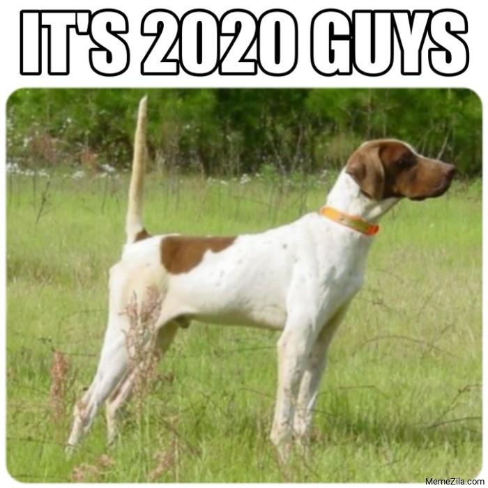 Its 2020 guys Straight tail dog meme