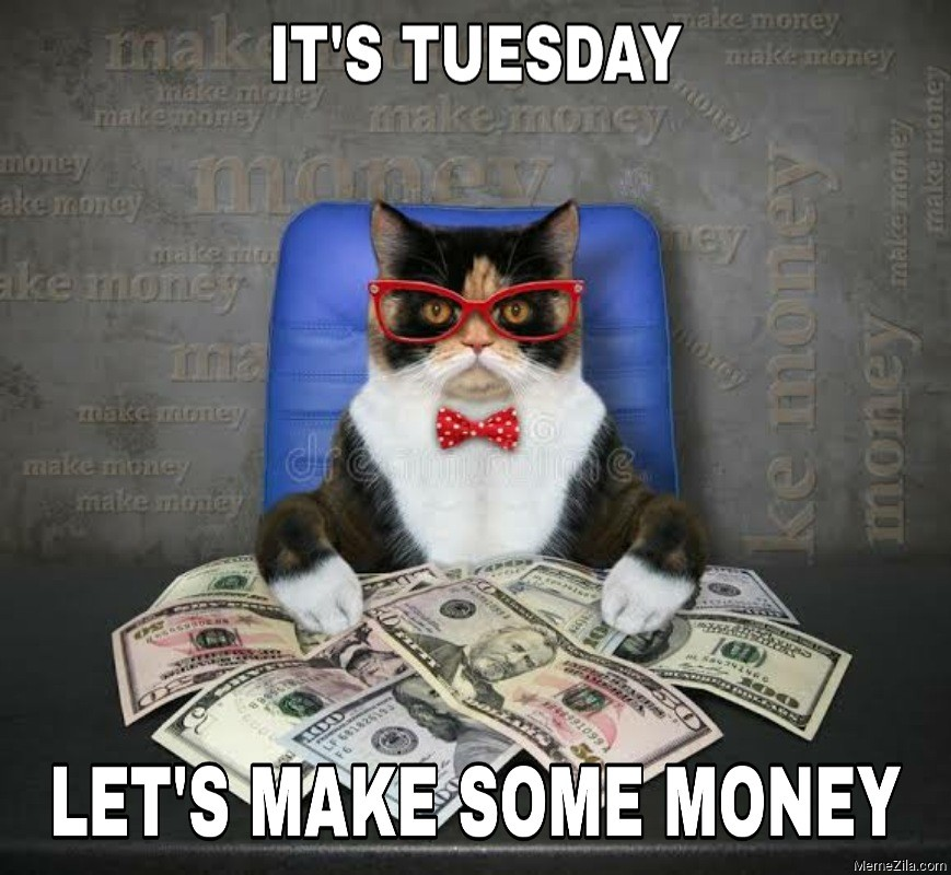 Its Tuesday Lets make some money cat meme