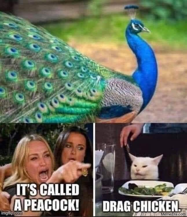 Its called a peacock Drag chicken meme