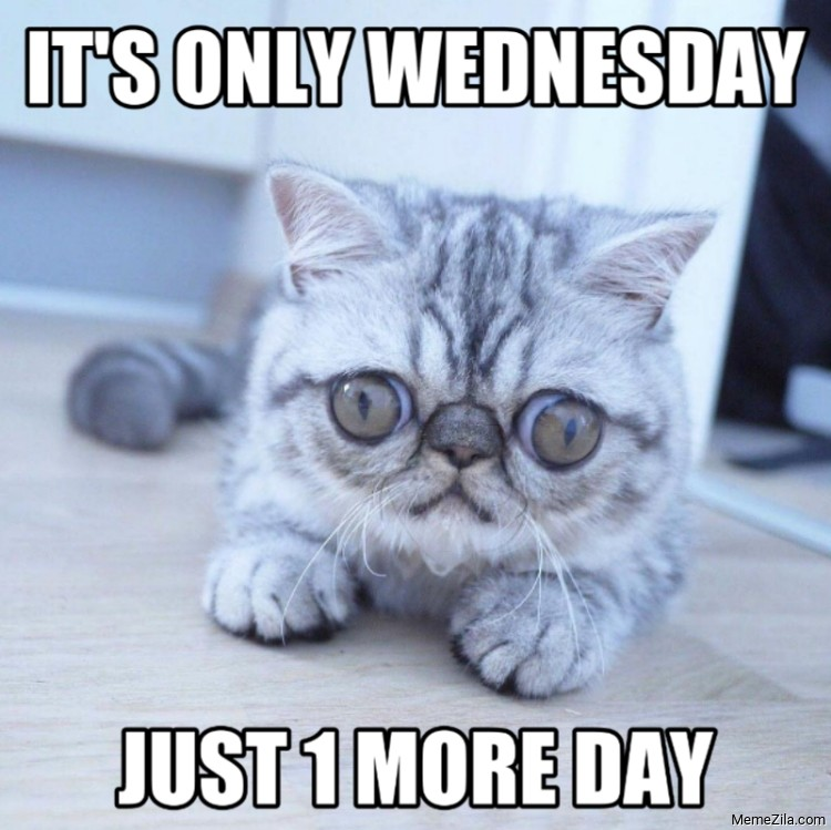Its only wednesday just 1 more day meme