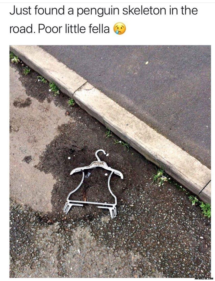 Just found a penguin skeleton on the road Poor little fella meme