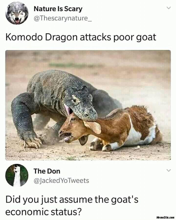 Komodo dragon attacks poor goat meme
