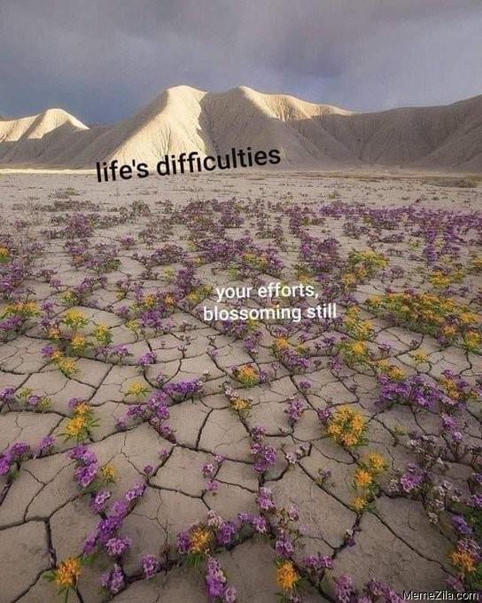 Lifes difficulties vs your efforts meme