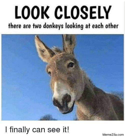 Look closely There are two donkeys looking at each other I finally can see it meme