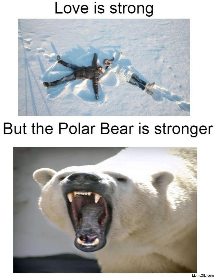 Love is strong But the polar bear is stronger meme