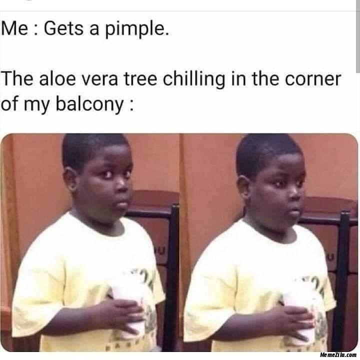 Me gets a pimple The aloe vera tree chilling in the corner of my balcony meme