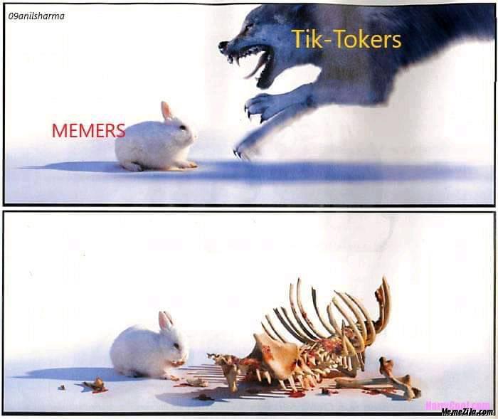 Memers vs tiktokers Dog vs rabbit meme
