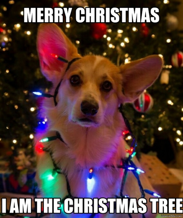 Merry christmas I am the christmas tree dog meme