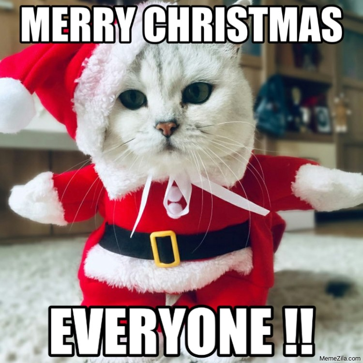 Merry christmas everyone cat meme