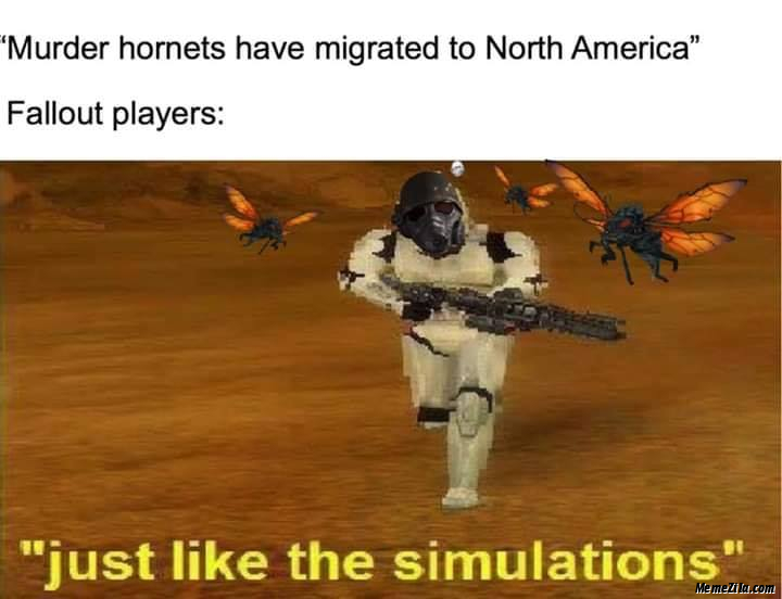 Murder hornets have migrated to North america Meanwhile fallout player Just like the stimulations meme