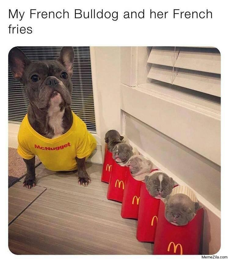 My French Bulldog and her French fries meme