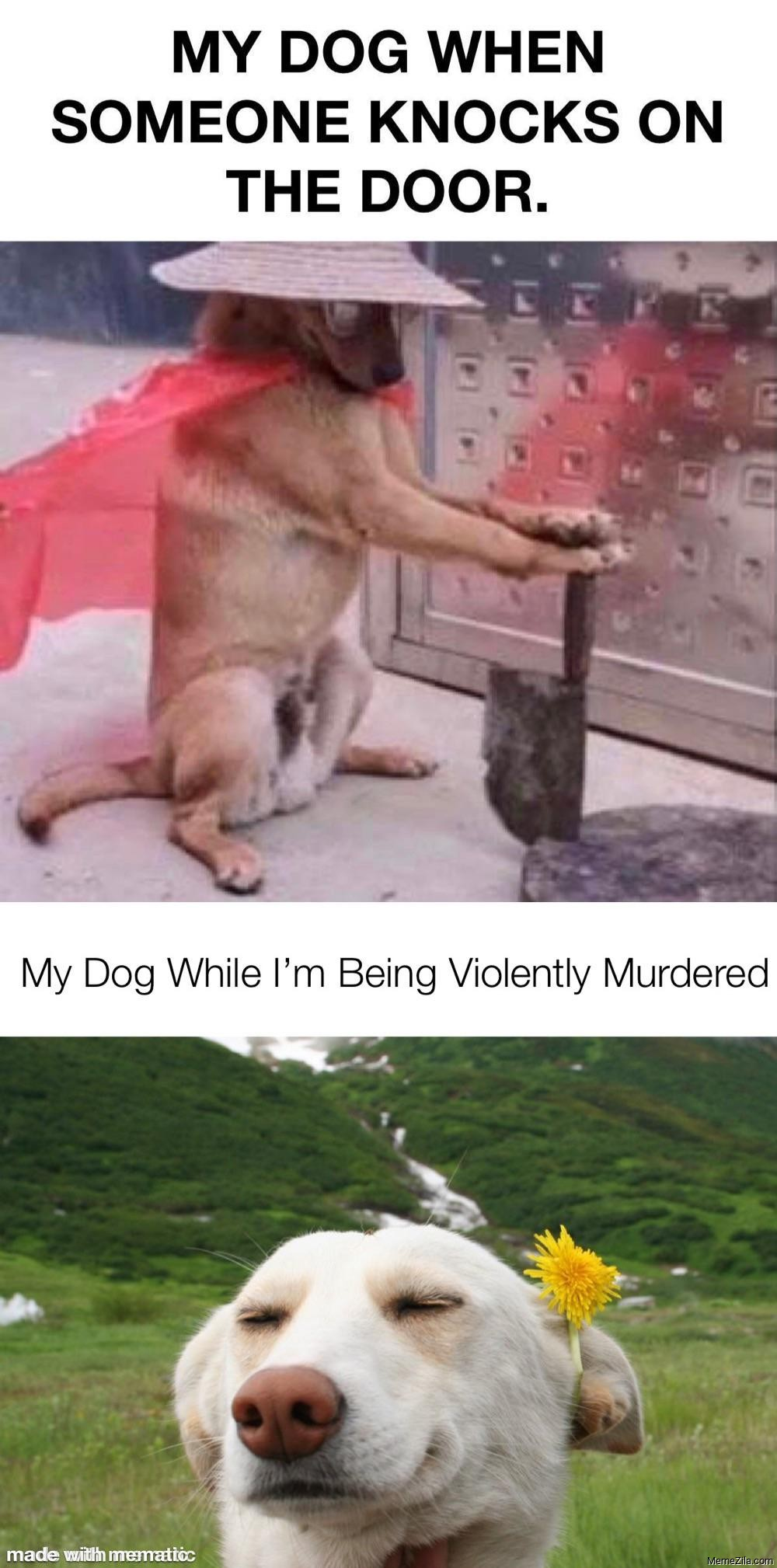 My dog when someone knocks on the door vs My dog while I am being violently murdered meme