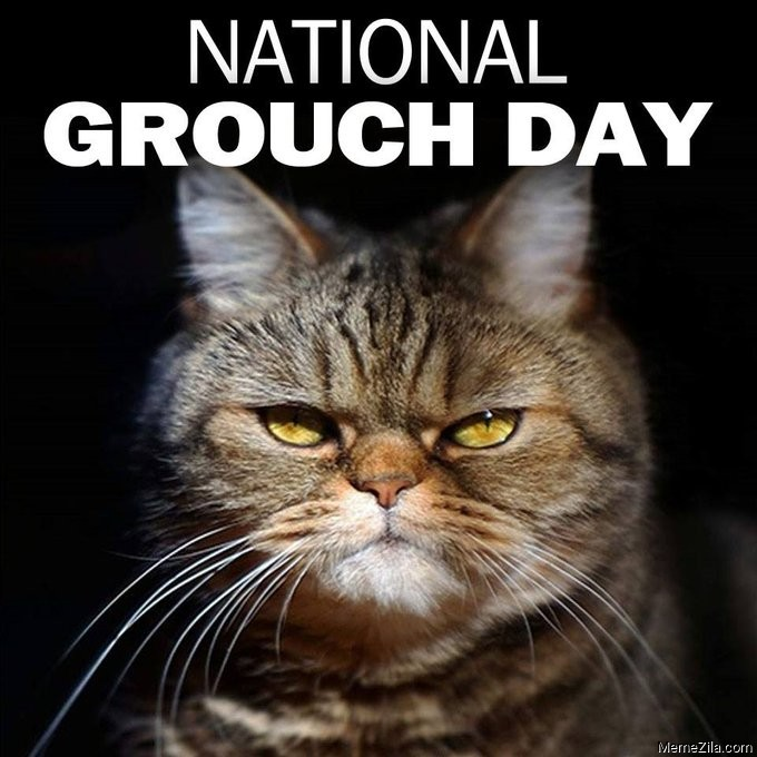 National grouch day cat meme