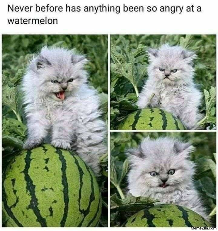 Never before has anything been so angry at a watermelon meme