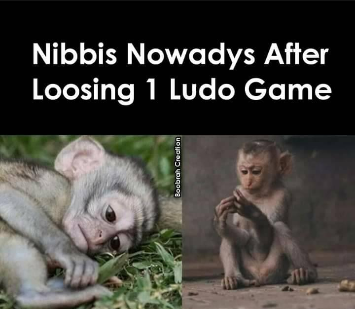 Nibbis after nowdays losing one ludo game meme
