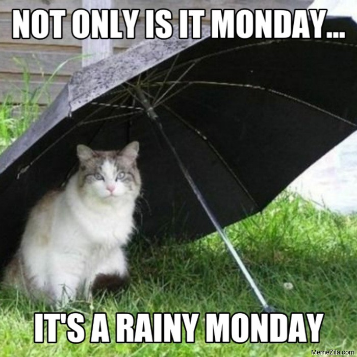 Not only is it monday Its a rainy monday cate meme