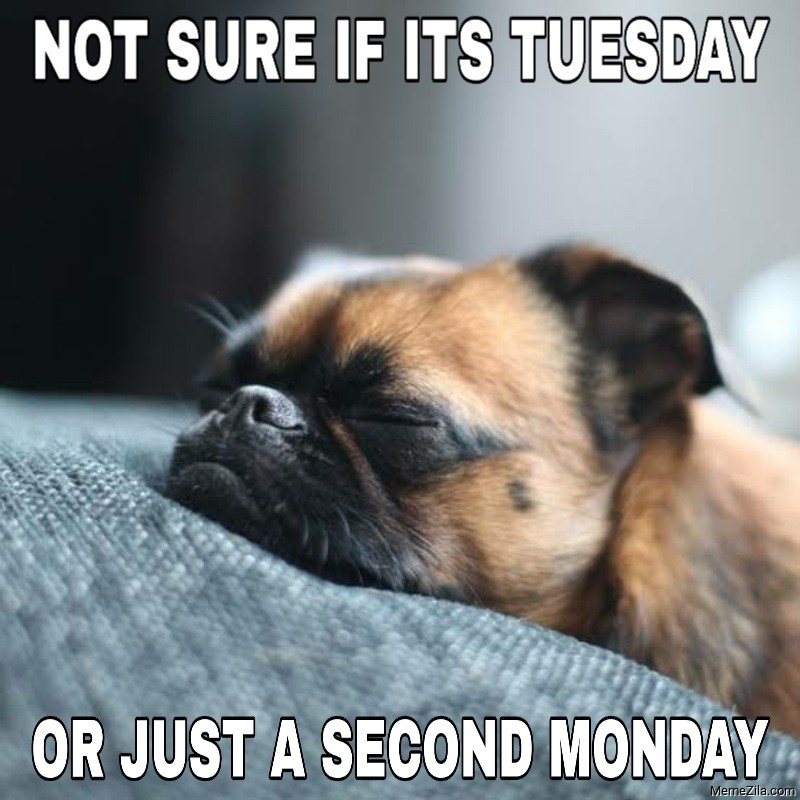 Not sure if its Tuesday or just a second Monday meme