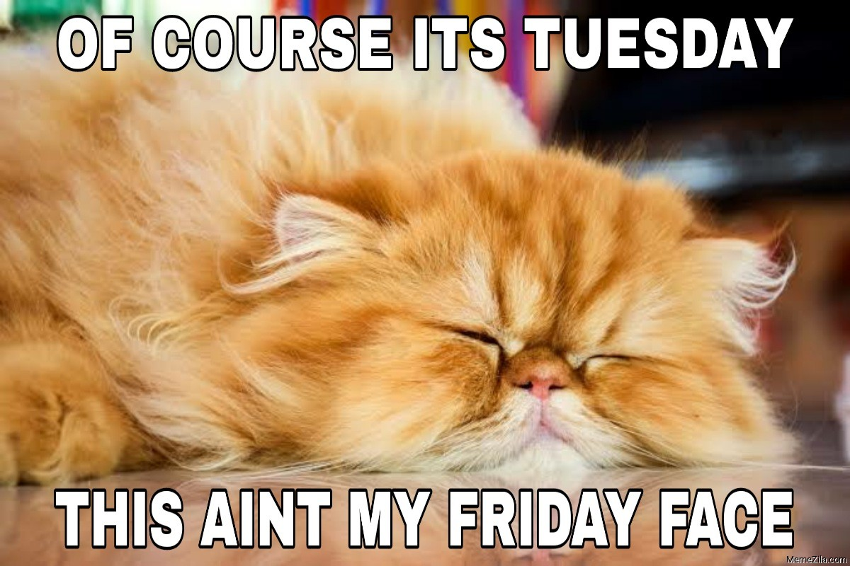 Of course its Tuesday This aint my Friday face cat meme