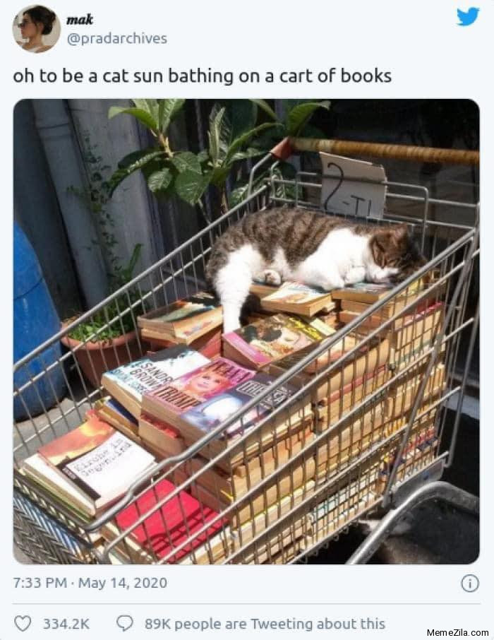 Oh to be a cat sun bathing on a cart of books meme